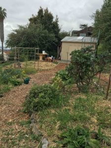 photo of school garden